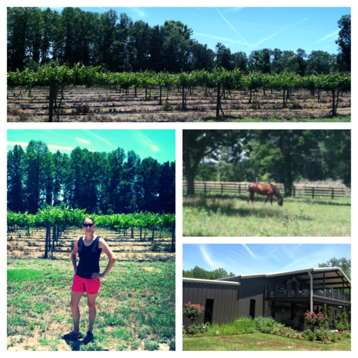 Watermelon Creek Vineyard - Glennville, GA